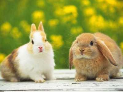 巨蟹座适合养什么植物 属兔人养什么植物最旺自己的