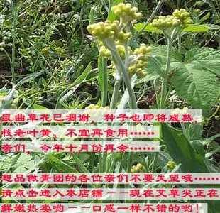 山下智久长泽雅美绯闻 赤梨美来ofje070磁力链 清明菜的花能吃吗
