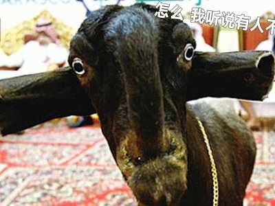 最后一个丑萌丑萌的 世界最丑的十大动物