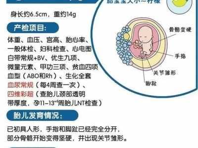 3个阶段重要的产检项目都在这里 怀孕3个要做什幺检查