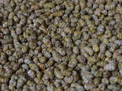 云南铁皮石斛干条与枫斗的区别及食用方法禁忌 铁皮枫斗食用方法