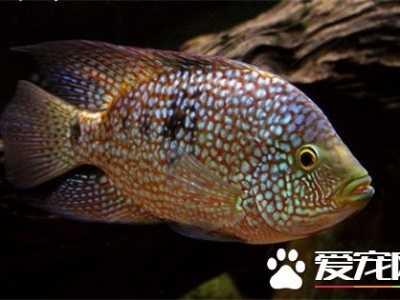 热带鱼怎幺养不会死 热带鱼养殖