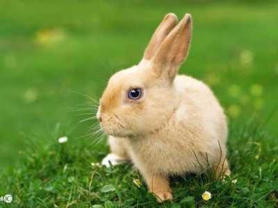 1975年属兔人的中晚年命运 2014年兔人命运