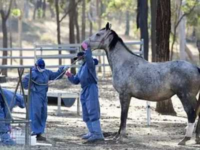 马疾病│国内外常规疫苗免疫 马的各种病