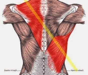 建议想要增肌的话体脂最好降到12%以下 增肌运动建议