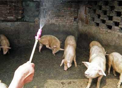 看看哪儿个你没注意 中国养猪结构