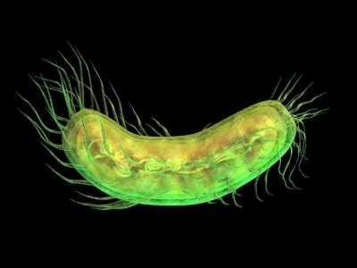 科学家发现极强悍的远古细菌 新型细菌病毒