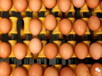 他们可以为争夺奖牌多补充一些蛋白质吗 挪威拒绝申办冬奥