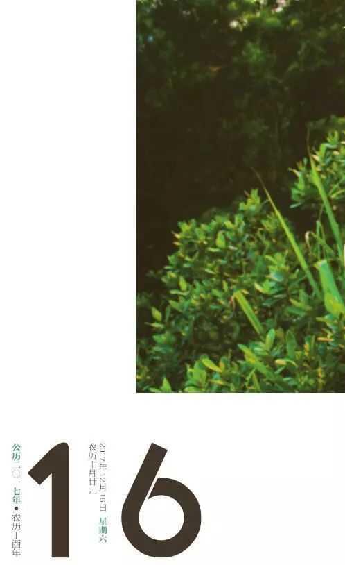 深圳植物日历 野百合水漾晚安冻膜