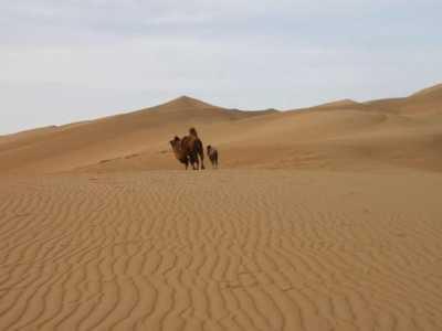 中国沙漠多久能绿化完 人们成功向沙漠要回良田几十