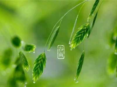谷雨节气养生谨记这六点 关于谷雨时节养生