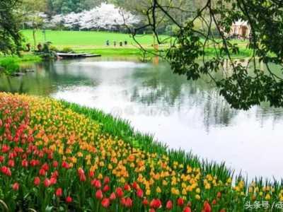 杭州太子湾公园免费呈现最美花季 杭州太子湾公园门票