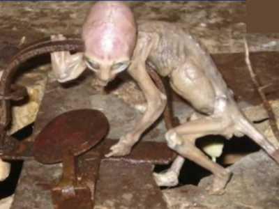墨西哥一农场被曝发现外星人遭农夫淹死 墨西哥外星人宝宝