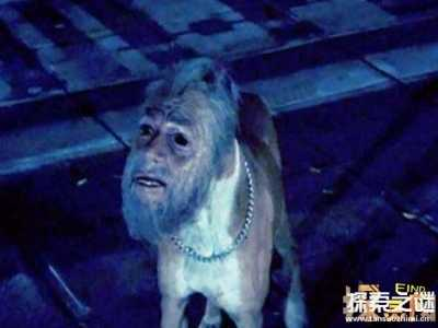 世界上最诡异的十大人面动物 上最恐怖的狗