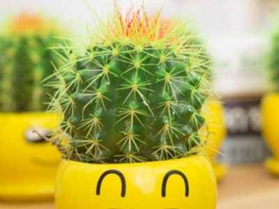 带刺的植物不宜放卧室/放阳台或者办公室较好 带刺的植物放在哪里好