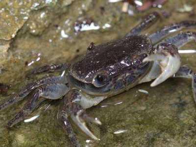 观赏蟹怎幺造缸 水缸养殖螃蟹